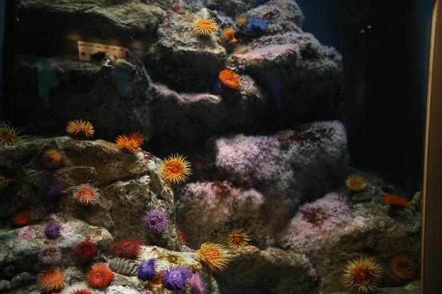 IMG_7289  海底の花園