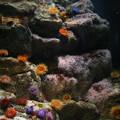 Photos: IMG_7289  海底の花園