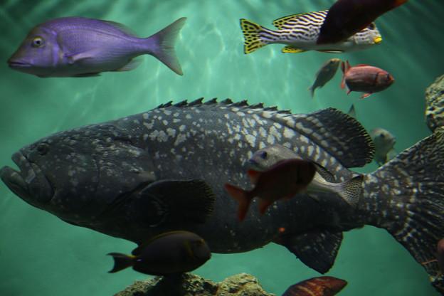 IMG_7205  ジャンボ級の魚(サメも一飲み?)