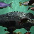 Photos: IMG_7205  ジャンボ級の魚(サメも一飲み?)