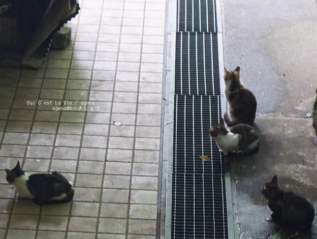 山寺猫。(12系 山形仙台旅)