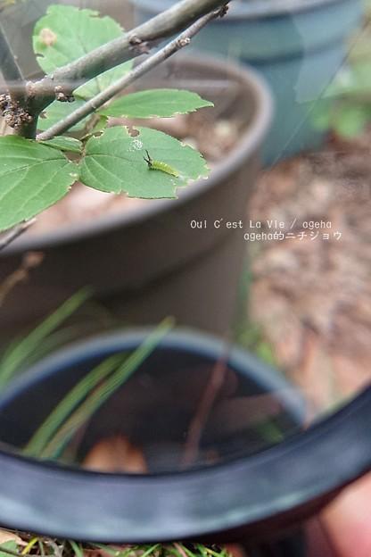 虫眼鏡で覗きます。(荒川自然公園)