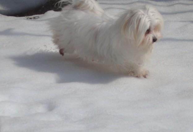 雪と遊ぶマル