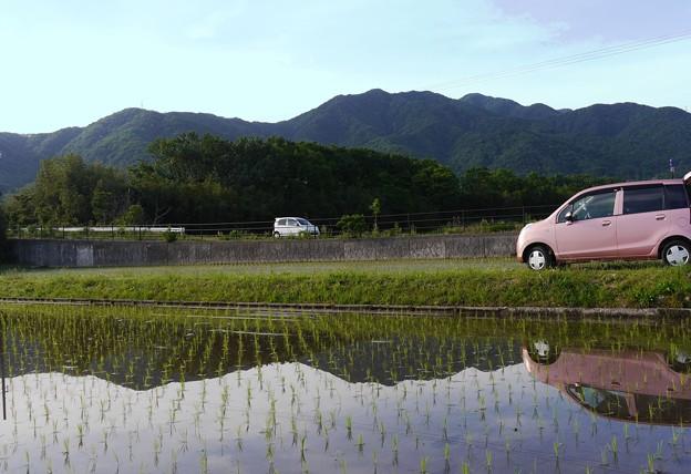 水田に映る景色