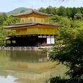 写真: 新緑の金閣寺