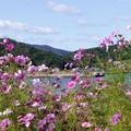 写真: 久々子湖畔