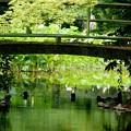 Photos: 緑の橋