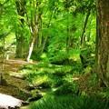 糺の森  瀬見の小川