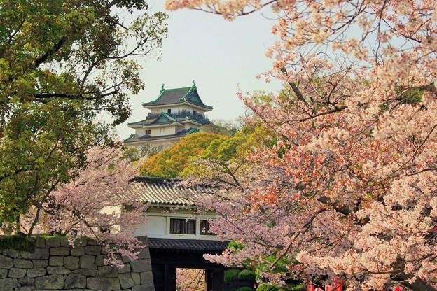 和歌山城のさくら