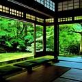 写真: 深緑の瑠璃光院