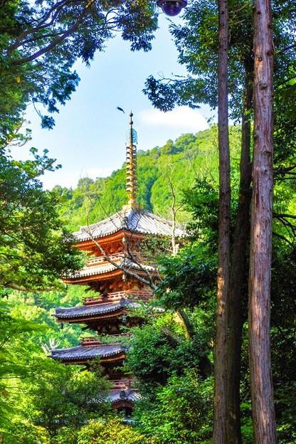 写真: 海住山寺