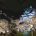 大阪城ブルーライトアップと桜