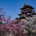 桜と桃山城
