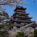 Photos: 桜と桃山城