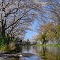 八幡堀春風景