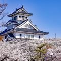 長浜城桜雲