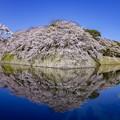 Photos: 彦根城 鏡桜