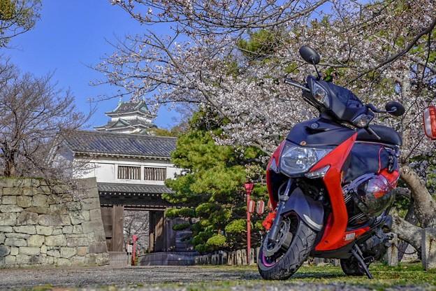 Photos: 城と相棒