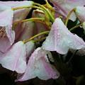 写真: 今日も雨・・・(>_<)