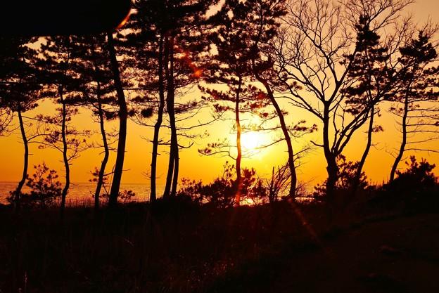 夕景 見越しの松