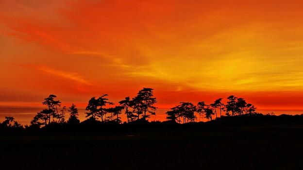 夕焼 見越しの松