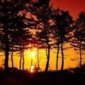 海岸の見越しの松林
