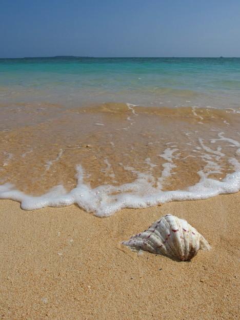 貝さんが似合う海なのです^^