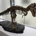 ティラノサウルスさんはジュラ紀にはいませんでした^^;