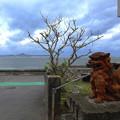 Photos: 海沿いのお家にシーサーさんがいらっしゃいましたです^^