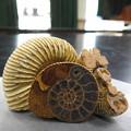 Photos: ちょっと1億年ほど遡ってみましょう^^