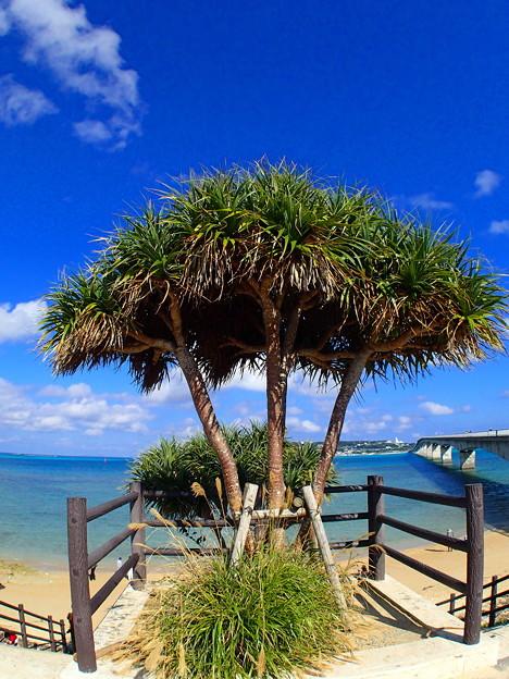 沖縄に戻りましたです^^