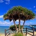 Photos: 沖縄に戻りましたです^^
