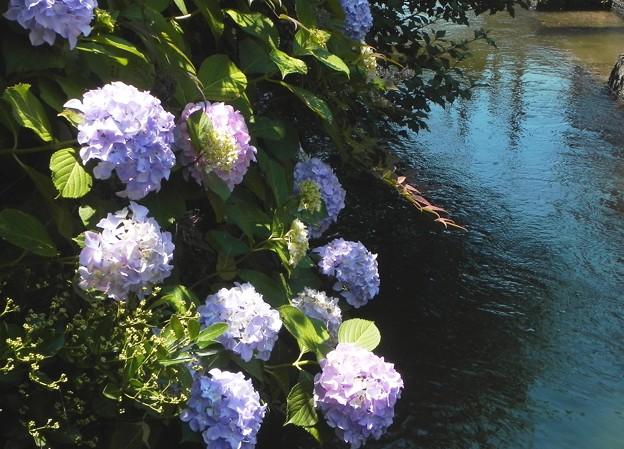写真: DSCN5142 梅雨の花