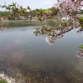 写真: 水面と湖畔を彩って