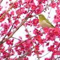 Photos: 春の知らせを感じて-1