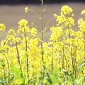 Photos: 春の川越-3