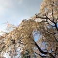 Photos: 春の川越-7