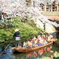 Photos: 春の川越-11