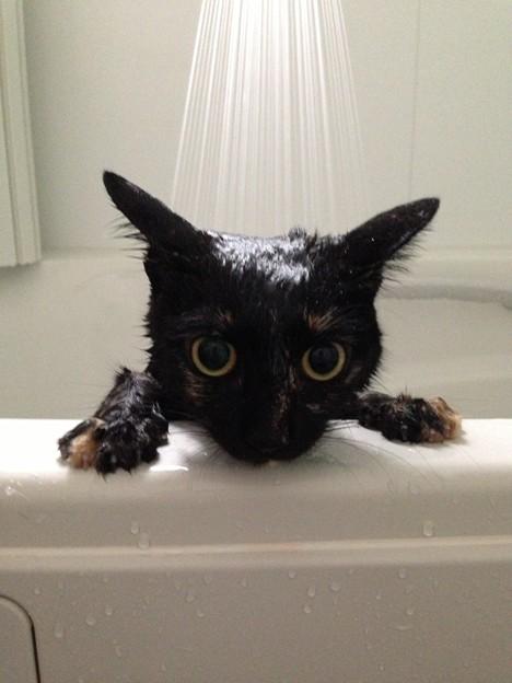 お風呂は嫌い...