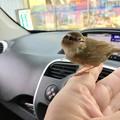 Photos: 小鳥