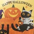 Photos: 可愛い黒猫さんに出会った!!