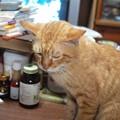 写真: 2010年6月13日のボクチン(6歳)