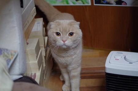 2018年4月22日のスコちゃん(オス5歳)