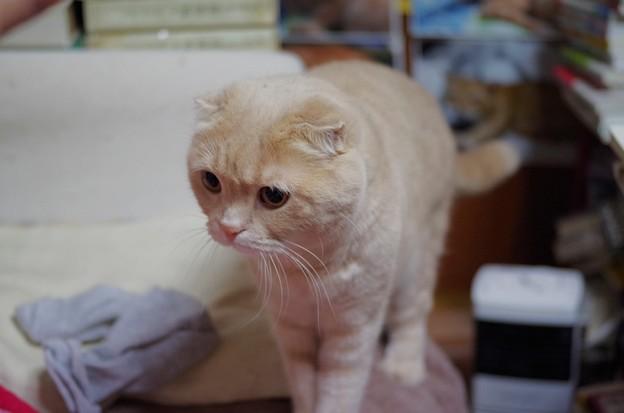 写真: 2018年4月22日のスコちゃん(オス5歳)