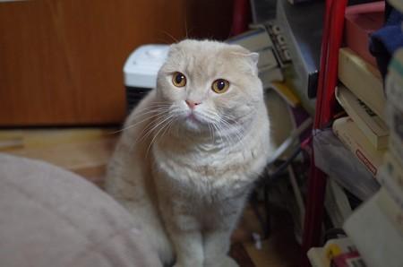 2018年6月17日のスコちゃん(雄5歳)