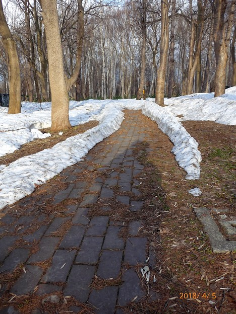 散歩道入り口残雪