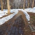 写真: 散歩道入り口残雪