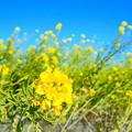 Photos: 春満開!