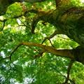 Photos: 緑が降って来た!