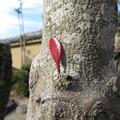 写真: やんちゃな葉っぱ